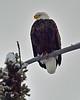 Eagles :