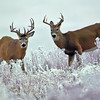 Montana Deer : Ladies, if you want a couple of pictures that will really make you go ooooooh and ahhhhhhhhhh, check out the 5th pic on page one. Could you be the one in a million who isn't moved by this sentimental pic? You'll know the picture the second you see it. edit